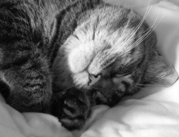 Sleeping_cat_in_black_and_white